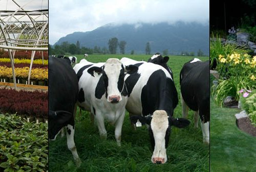 home_banner_cows