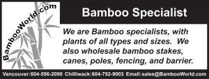 Bamboo World