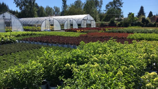 We are an active Horticulture Industry