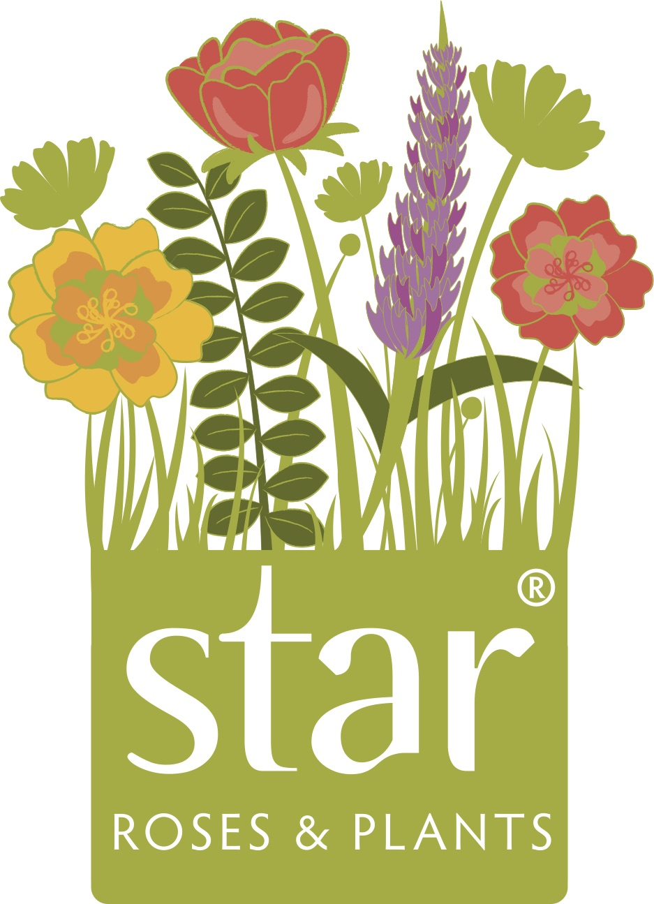 Star Roses & Plants
